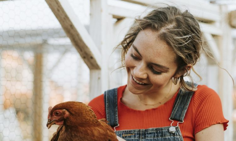 What you need to know before you get chickens